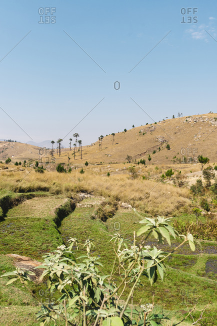 Dry rice fields landscape after harvesting in Antananarivo, Madagascar