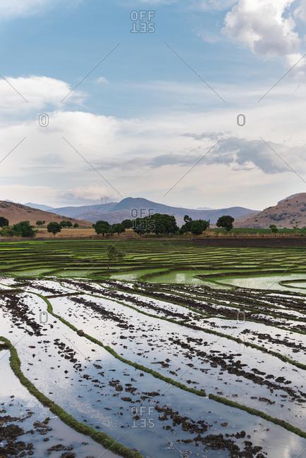 Green rice fields among cloudy sky with sun going down, Fianarantsoa, Madagascar