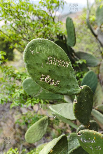 Fianarantsoa, Madagascar - October 13, 2019: Close up of a large cactus plant leaves painted with travelers signatures