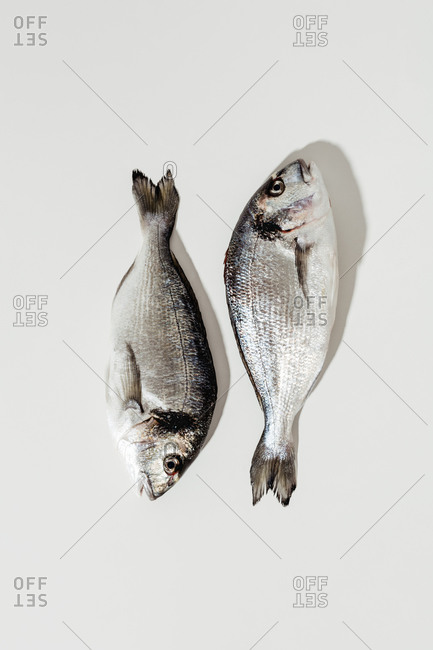 Two whole fish on white background