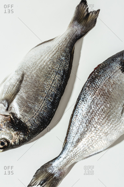 Close up of two whole fish on white background
