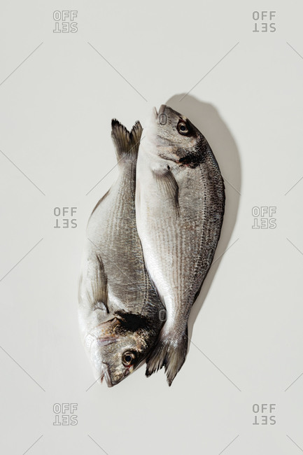 Overhead view of two whole fish on white background