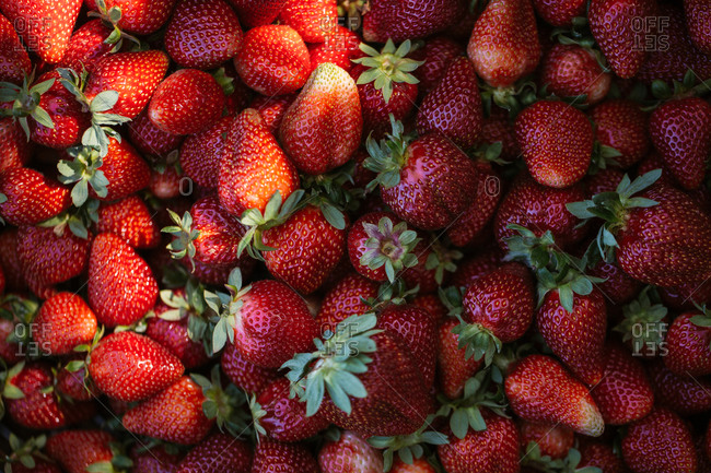 Close up of fresh picked strawberries