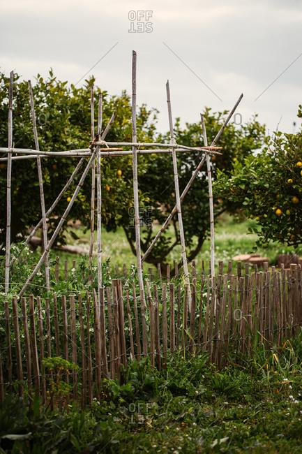 Garden trellis made of bamboo in front of lemon trees