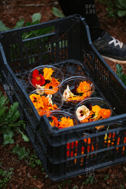 Colorful picked flowers sorted in dishes in a black crate