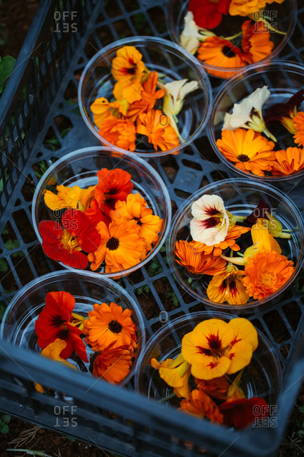 Overhead view of colorful picked flowers sorted in dishes in a black crate