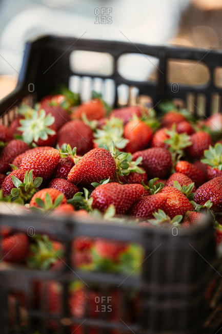 Close up of freshly picked strawberries in a crate