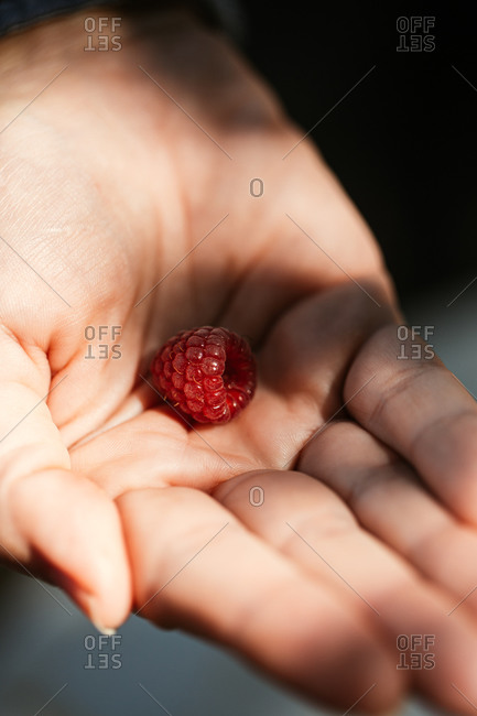 Hand holding a single picked raspberry