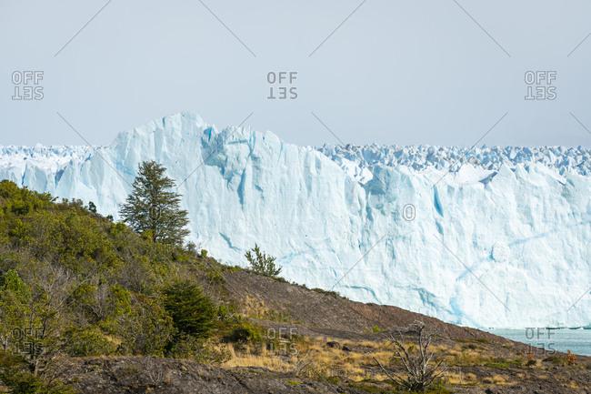 Idyllic view of tree and perito moreno glacier, Patagonia, argentina