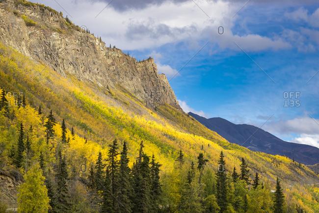 Yellow trees growing on mountain side near long lake in autumn, glenn highway, southcentral alaska, alaska, usa