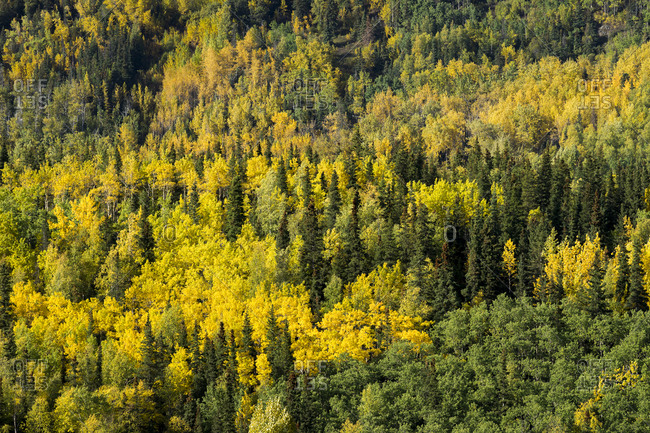 Scenic view of forest by cooper landing in autumn, kenai, alaska, usa