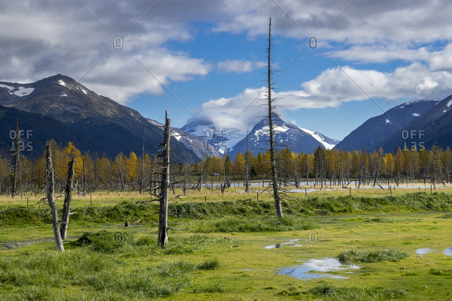 Alaska wildlife conservation center, portage, downtown anchorage, anchorage, southcentral alaska, alaska, usa