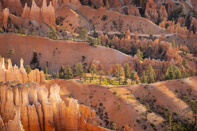 Hoodoos in Bryce canyon amphitheater after sunrise, sunset point, Bryce canyon national park, Utah, usa