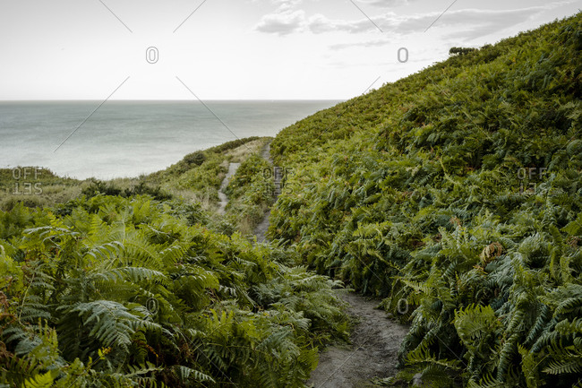 Ferms line a walking path between whitby and robinshood bay with