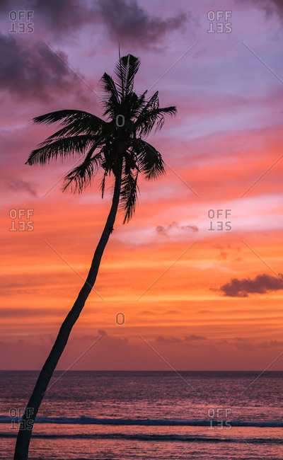 Sunset with a lonely coconut tree in guam