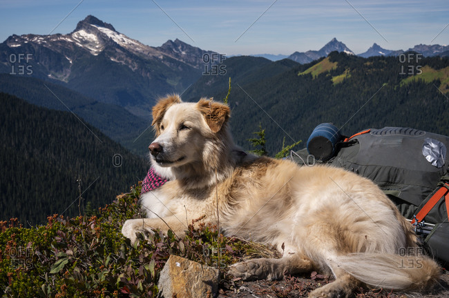 Fluffy dog on ridge with view of mountains