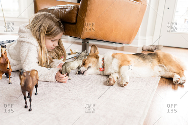 Side view of blond girl playing with toy horses with corgi dog asleep