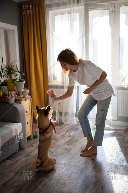 Woman training dog at home