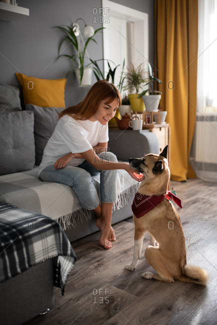 Smiling woman scratching dog at home