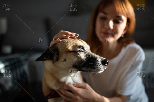 Blurred owner stroking glad dog
