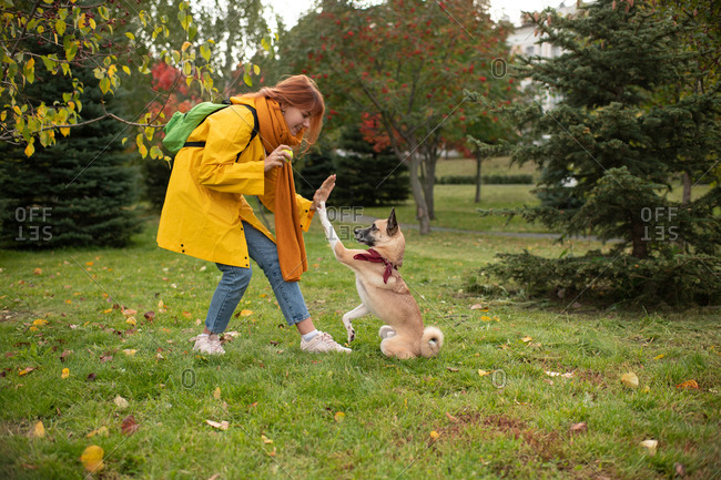 Young woman training dog to give high five