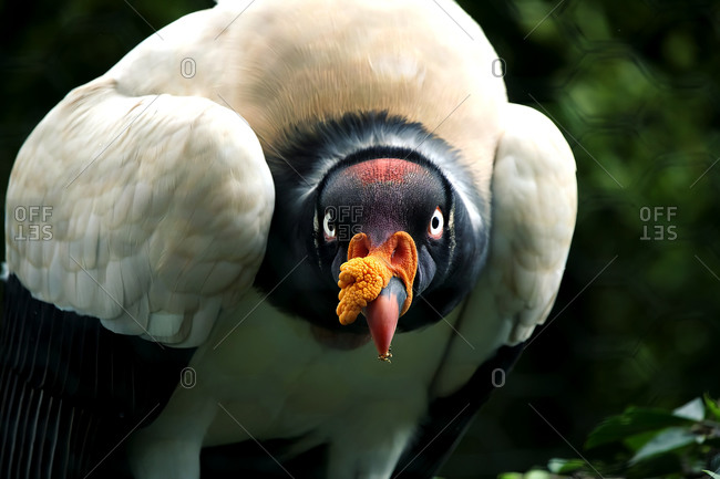 Bird of prey and birds