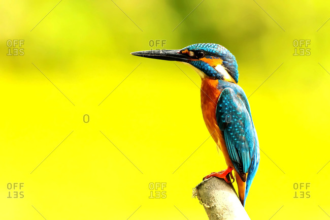 Animal life and birds in nature