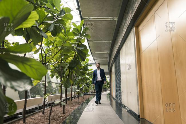Businessman walking by plants in office corridor
