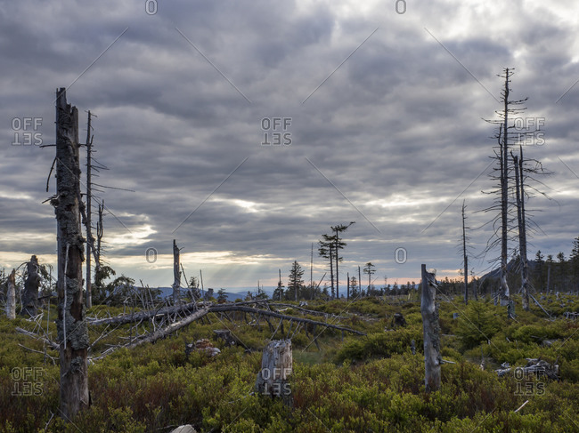 Cloudy sky over dead trees in Kunisch Mountains