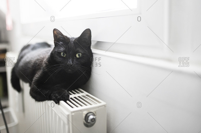 Portrait of black cat relaxing on top of radiator
