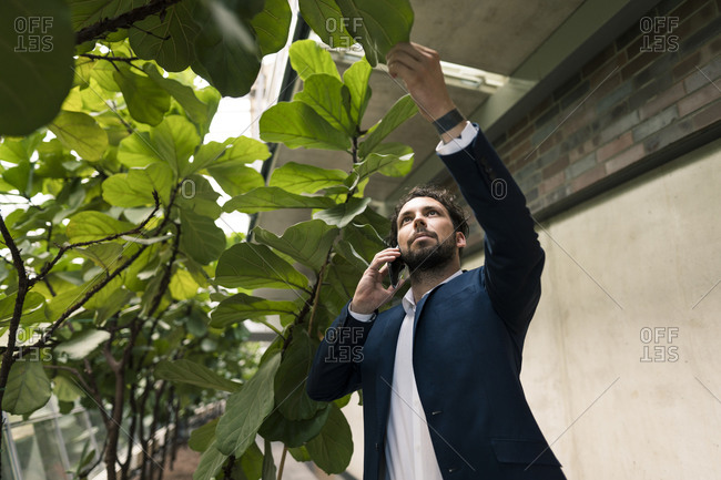 Male entrepreneur touching plant while talking on smart phone at office