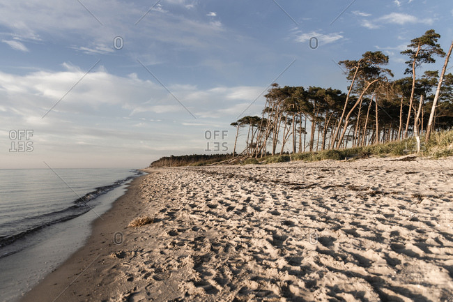 Scenic view of beach against sky during sunset at Mecklenburg- Fischland-Darfl-Zingst- Germany