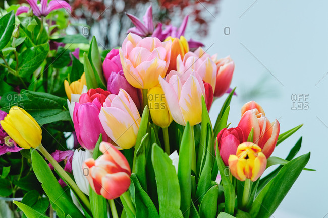 Bunch of tender tulips of yellow and pink colors in bright flower shop