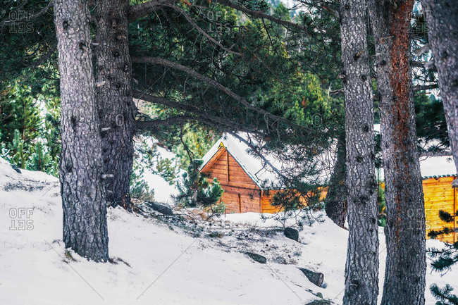 Small wooden cabin located in snowy forest with lush green coniferous trees on winter day