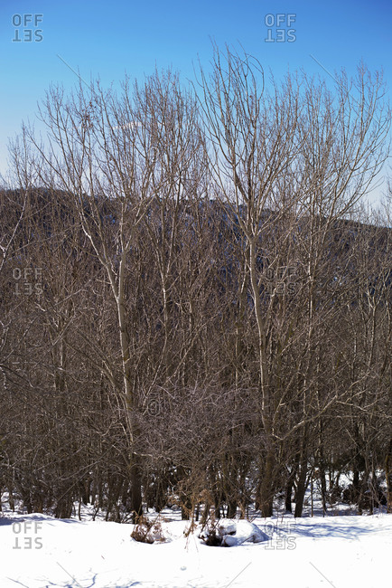 Winter landscape of Montseny Massif in Spain with leafless trees in snow covered valley against mountain range in sunny day with blue sky