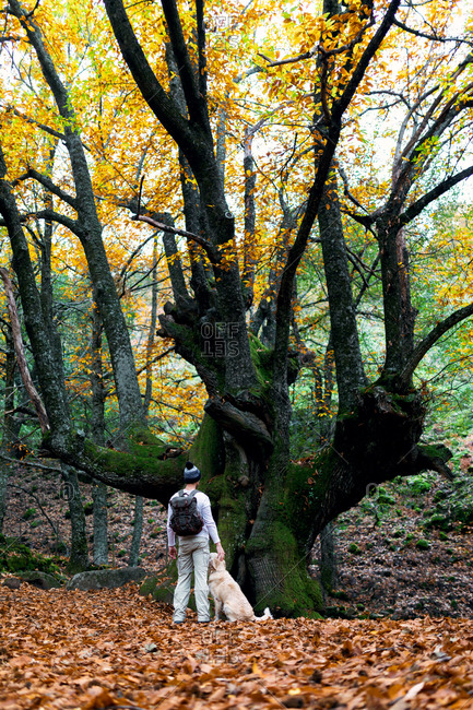 Back view of male standing with dog near huge tree in forest in fall