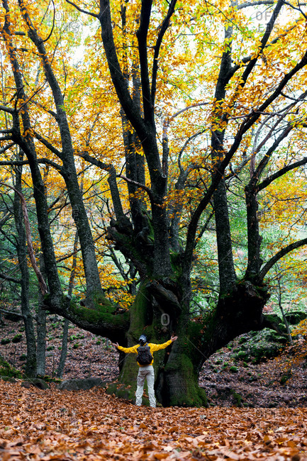 Back view of anonymous male tourist standing with outstretched arms near tree in autumn park and enjoying freedom