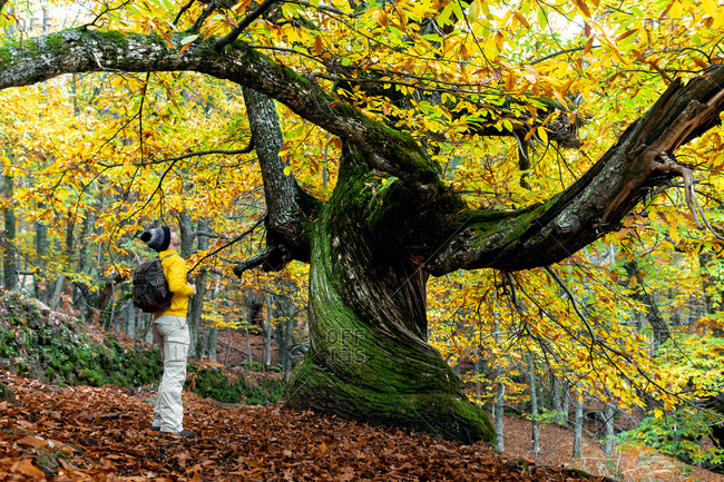 Side view of anonymous male tourist standing near tree in autumn park and enjoying freedom