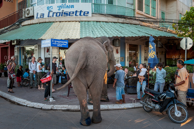 Sambo, Famous Elephant, Phnom Penh, Cambodia - 04 November 2009: Nations Capital Famous Elephant Walks Down Riverside Street Every Evening After Work At Wat Phnom And Stops For Snacks And Donor Restaurants.