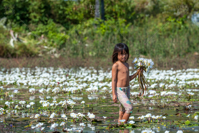 Water Lilly Pond, Kompong Thom, Cambodia - 29 December 2010: Child Picks Wild Water Lillies.
