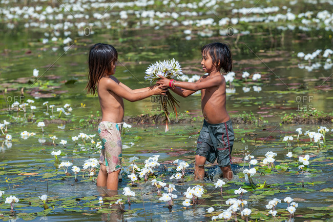 Water Lilly Pond, Kompong Thom, Cambodia - 29 December 2010: Two Children Share Wild Water Lilies.