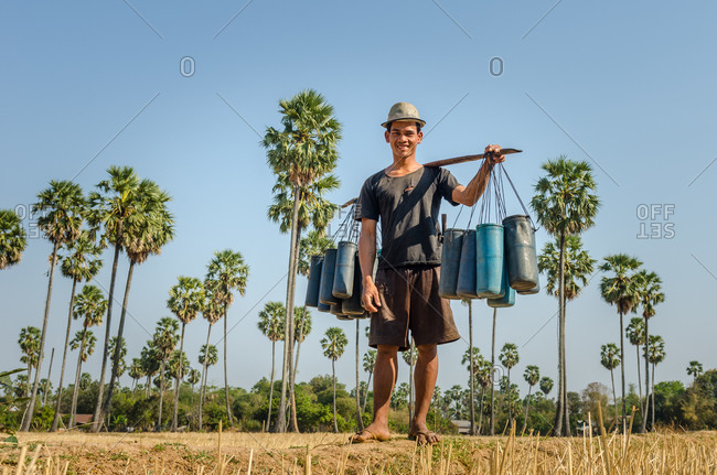 Kompong Chnang, Cambodia - 03 February 2011: Cambodian Farmer Collecting Palm Wine From Sugar Palm Trees.