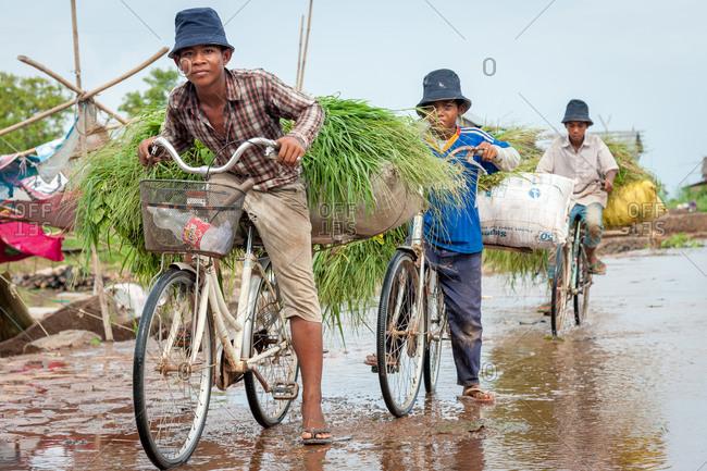 Kompong Chnang, Cambodia - 03 June 2012: 3 Cambodian Boys Carrying Animal Feed On Their Bikes.