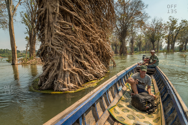 Preah Rumkel, Stung Treng Ramsar Site, Cambodia - 17 February 2013: Tourist Passes Amazing River Swept Roots Of Trees Exposed In Dry Season.