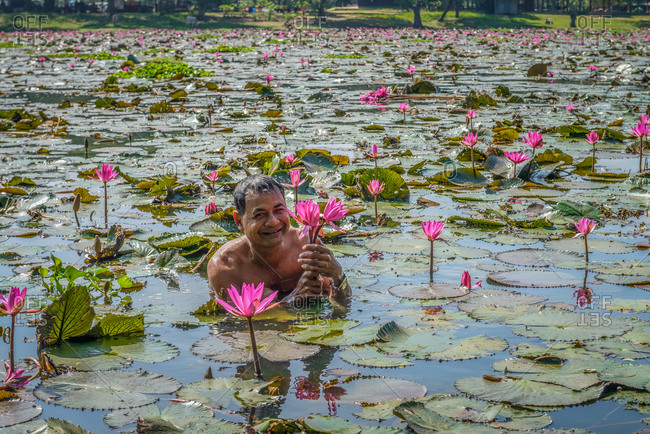 Water Lilly Pond, Angkor Park, Cambodia - 22 December 2013: Cambodian Man Collects Water Lilies To Eat.