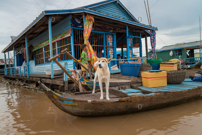 Kompong Luong Floating Village, Krakor District, Cambodia - 28 July 2014: Dog Protects Floating House With False Eyebrows - Cambodian Floating Village.