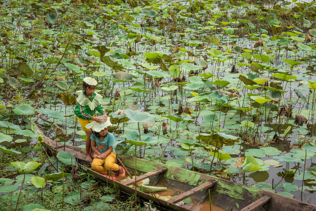 Lotus Pond, Battambang Province, Cambodia - 14 August 2014: Young Children  Fashion Rain Hats From Lotus Leaves In Old Wooden Fishing Boat In Lotus Pond.