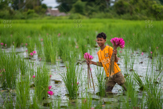 Water Lily, Kompong Thom Province, Cambodia - 23 October 2014: Young Khmer Boy Collects Water Lilies.