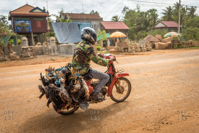 Farmer, On The Road, Cambodia - 17 September 2014: Chicken Transported To Market On Back Of A Motorbike Stone Maison Workshop In Background.