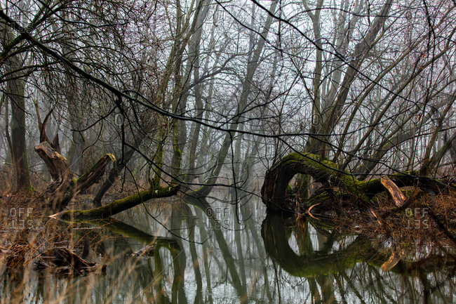 Mystery driftwoods and trees by the river in autumn